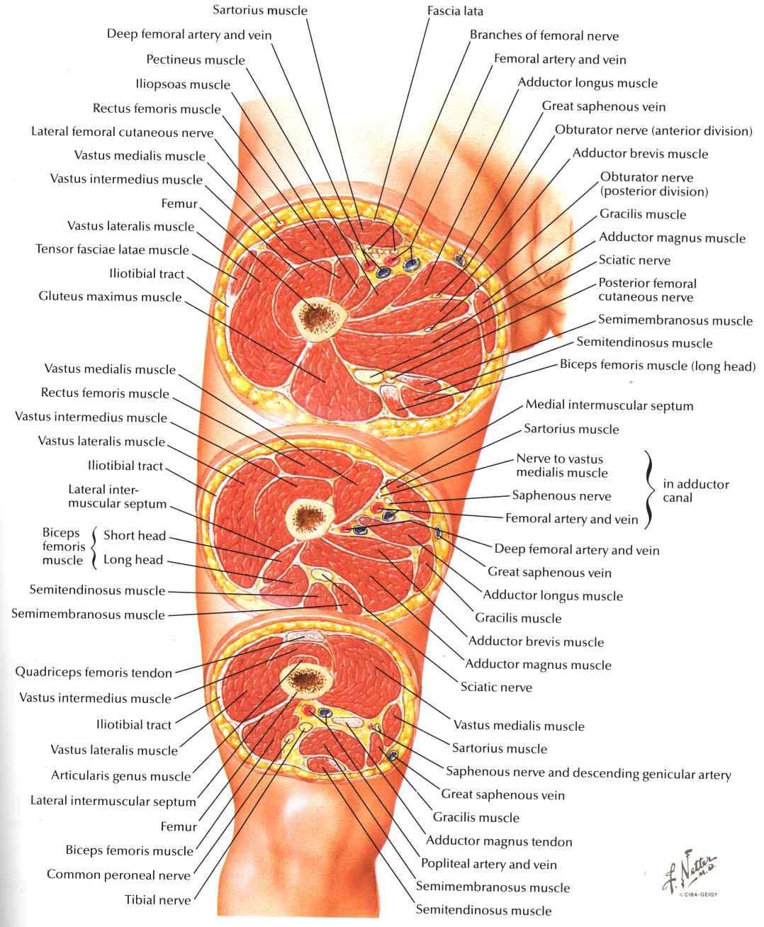 Boca Radiology Group template
